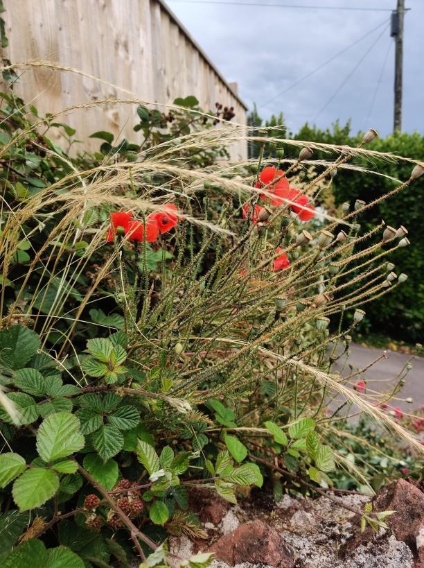 Plant Photography 11