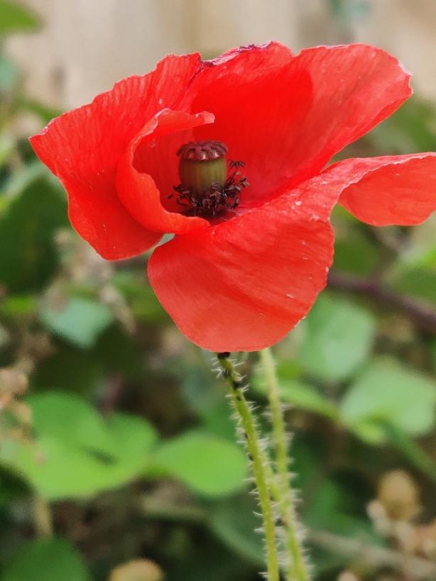 Plant Photography 13