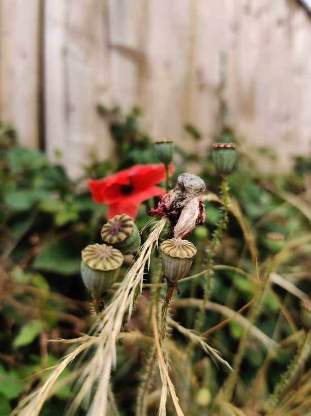 Plant Photography 8