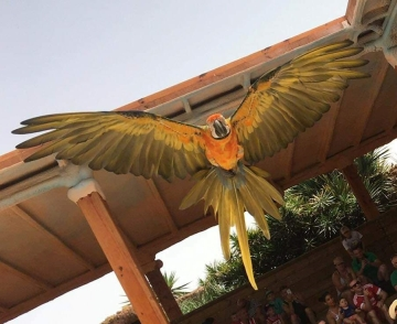 Wildlife Photography parrot