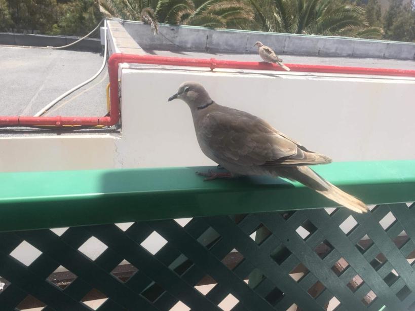 Bird Show Photography