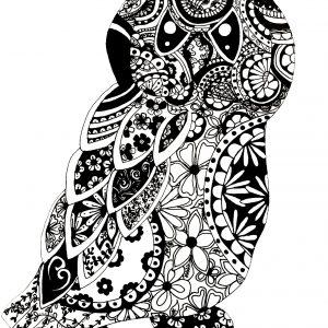 black and white owl white