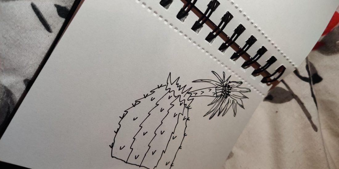 cactus flower lanz