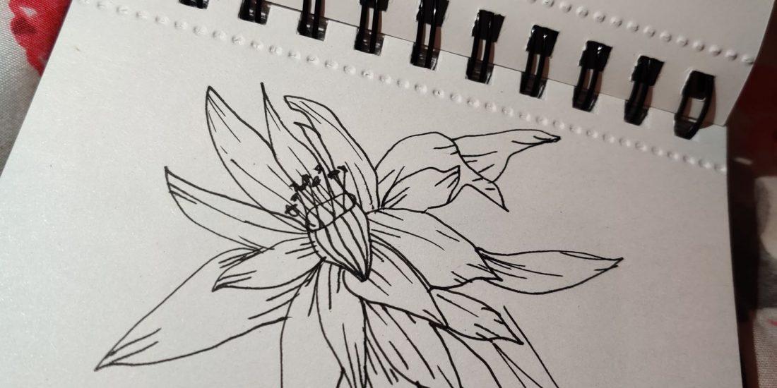 lanzarote cactus flower